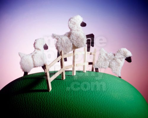 dream sheep leaping fence