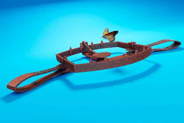 Butterfly in a Bear Trap on Blue Background stock photo